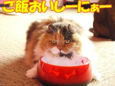 ネコのお食事タイム