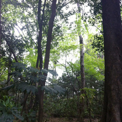 代々木の森