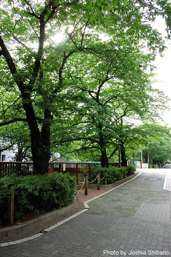 目黒川の新緑が心地よかったです。