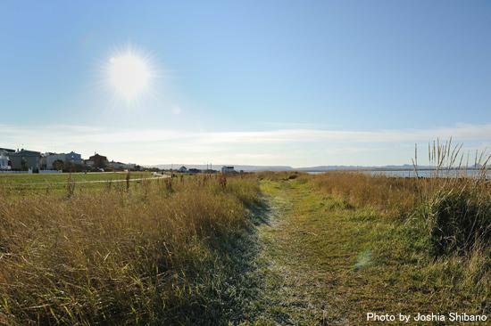 散歩コースになっている海岸沿い