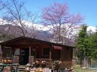 カフェ『わんこ』と桜
