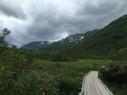 栂池自然園木道