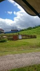 八方尾根スキー場天空牧場の子牛