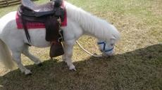 白馬村の白い馬名前募集中