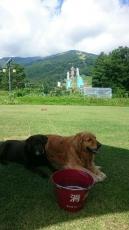 コテージ前庭の芝生で冬馬とティナ