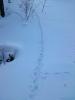 足跡と雪球