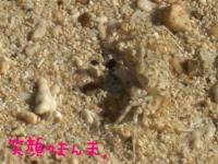 蟹の拡大。