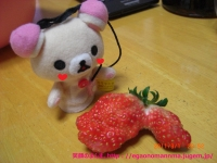 へんちくりん苺。?