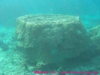 これも珊瑚なんだって。