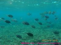 熱帯魚がいっぱい。