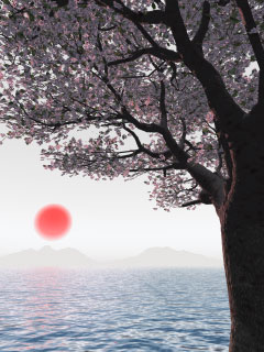 遠景日本桜
