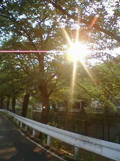 20060629_58031.jpg