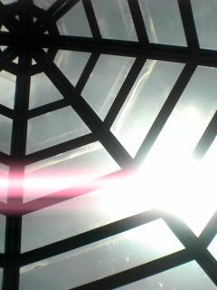 spiderweb,