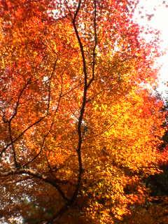 autumn ballade. -橙-