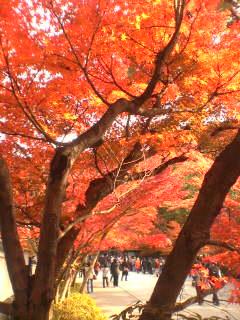 autumn ballade. -朱-