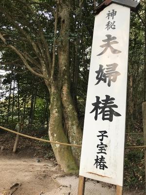 八重垣神社の子宝椿