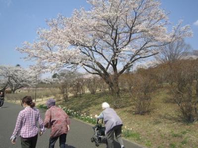 桜の季節ということは・・・