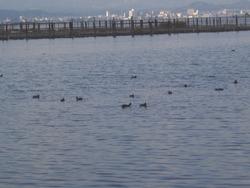 名称不明の鳥たち
