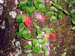 木を飾る葉