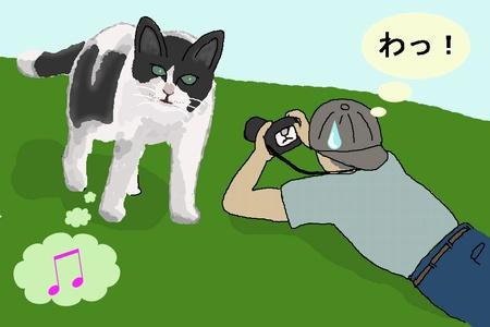ネコを撮る