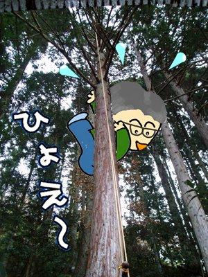 ネコはおだてても木には登らない