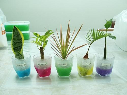 ポリマーを使った観葉植物
