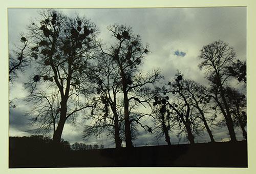 春待つ樹々(ベルギー・アルデンヌ)