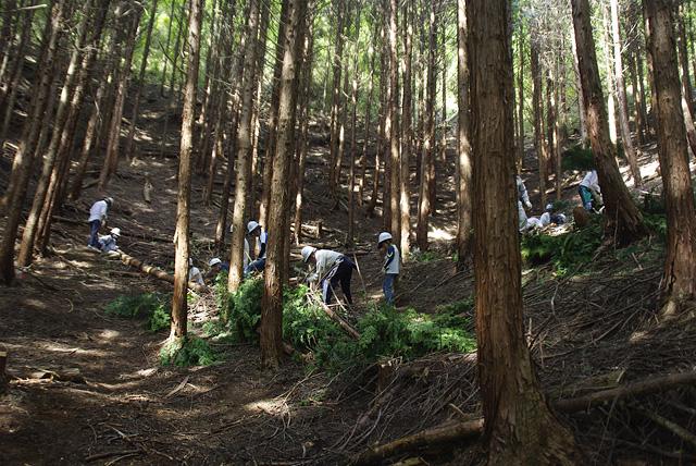 京都府和束の森で