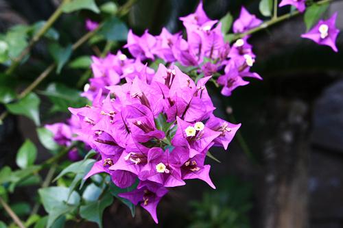 社殿の前の花