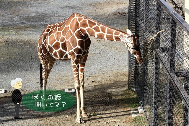 岡崎動物園で