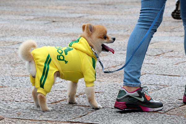 梅小路公園で見かけた犬の写真です