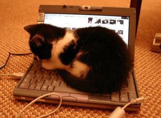 猫がノートPCの上に!