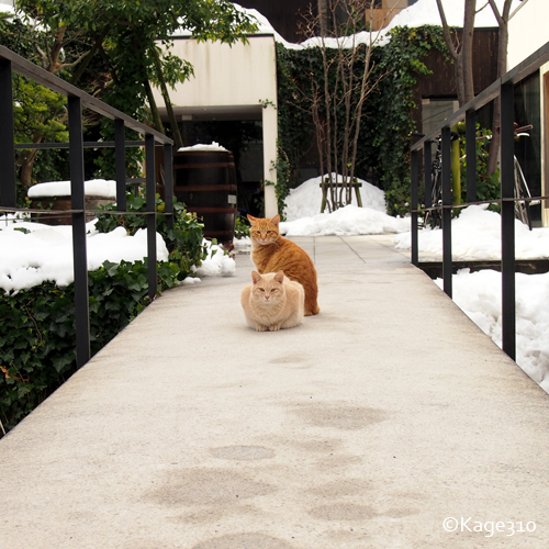 橋の上で待ちかまえるノラ猫の写真