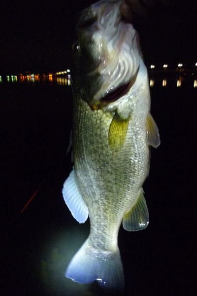 釣り 琵琶湖 夜