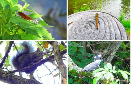 千歳川に生息する虫や動物