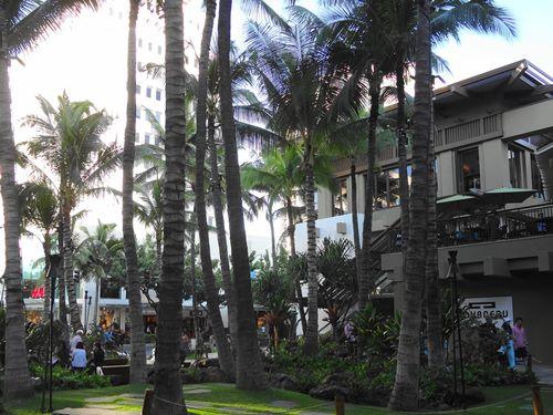 ハワイ ヤシの木 タコノキ
