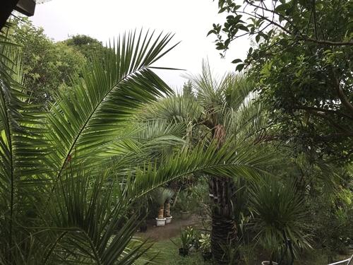 ココスガーデン雨