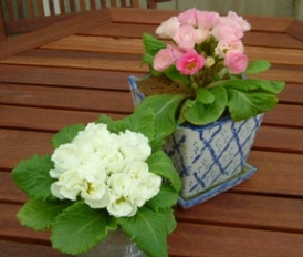 テラスの鉢植え