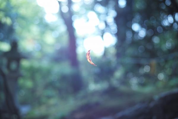 煌めく葉を見た.JPG