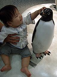 にせペンギン