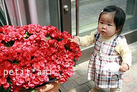 赤い花は大好きなの