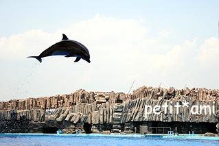 空飛ぶイルカ