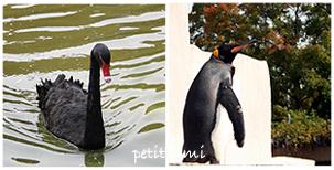 黒鳥&ペンギン