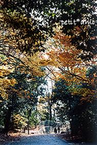 ある日森の中へ