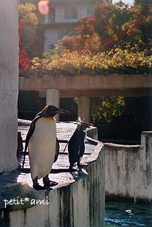 ペンギンと秋の風
