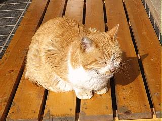 深大寺の猫