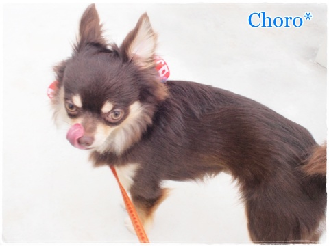 choro120603