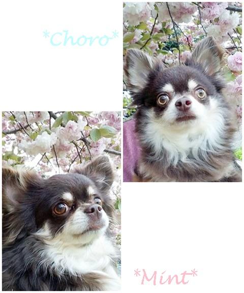 choro&mint