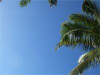 真っ青なハワイの空