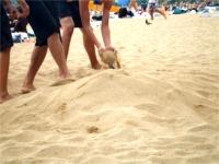 ハナウマ湾 埋められている人